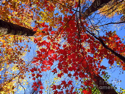 Photograph - Magical Fall Sunlight  by Cynthia  Clark