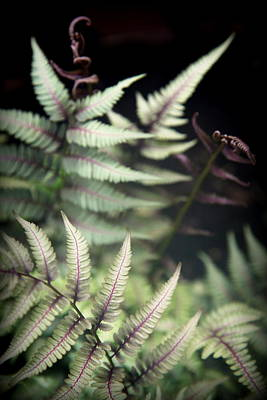 Forest Floor Photograph - Magical Forest 1 by Karen Wiles