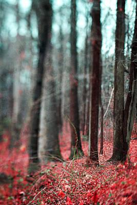 Wall Art - Photograph - Magical Forest by Kim Fearheiley