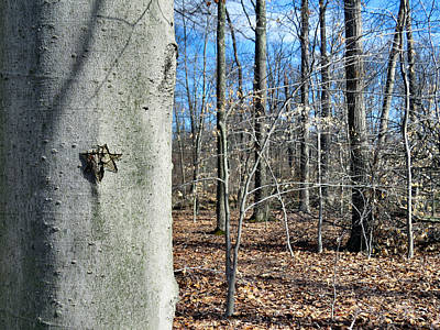Pentagram Art Photograph - Magical Forest by Art Dingo