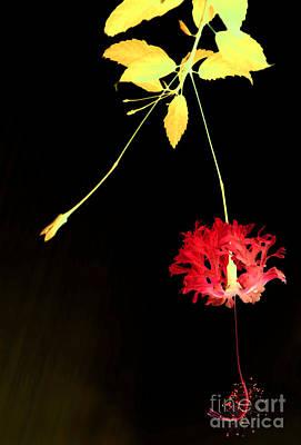 Digital Art - Magical Garden 8 by Leo Symon