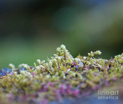 Photograph - Magical Moss by Sarah Crites