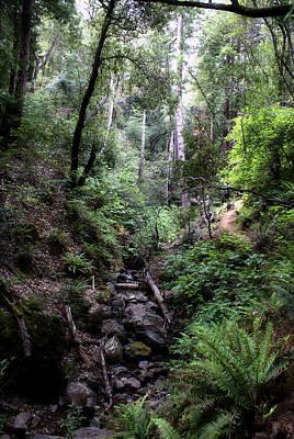 Photograph - Magical Mt. Tamalpais Forest by Ben Upham III