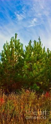 Magical Pines Art Print