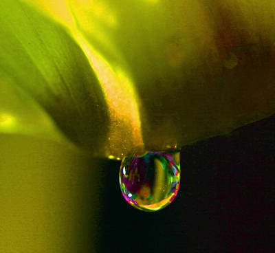 Photograph - Magical Raindrop by Sheila Kay McIntyre