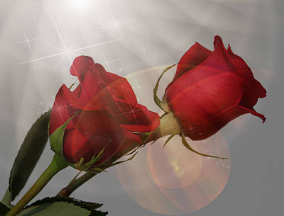 Photograph - Magical Roses by Judy Vincent