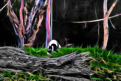 Walk In Magical Land Of The Black And White Ruffed Lemur Art Print