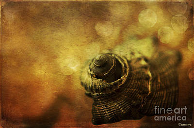 Photograph - Magical Seashell by Terry Rowe