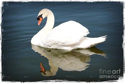 Photograph - Magical Swan by Carol Groenen