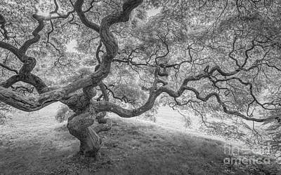 Magical Tree Bw Original