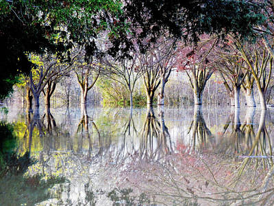 Fairys Photograph - Magical Trees by Pamela Patch