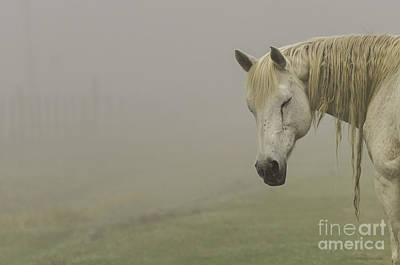 Magical White Horse Art Print by Cindy Bryant