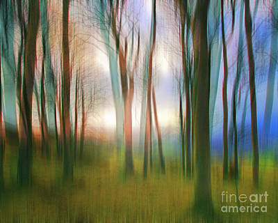 Photograph - Magical Woods by Edmund Nagele