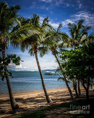 Magnetic Island Palms Art Print by Perry Webster