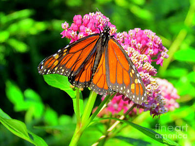 Vintage Ford - Magnetic Monarch Butterfly by Elizabeth Dow