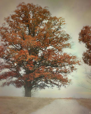Autumn Scene Photograph - Magnificence - Foggy Autumn Scene by Jai Johnson