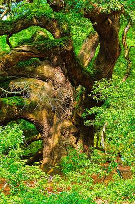 Oldest Living Tree Photograph - Magnificent Angel Oak by Louis Dallara