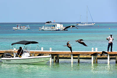 Photograph - Magnificent Frigate Birds Lunchtime by Darla Wood