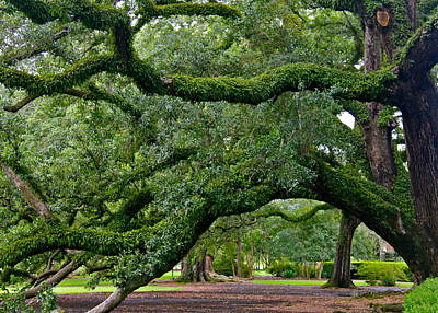 Photograph - Magnificent Oak Alley Tree by Denise Mazzocco