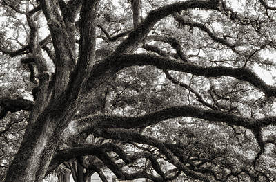 Photograph - Magnificent Oaks Of Louisiana by Photography  By Sai