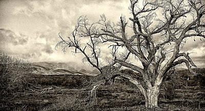 Spooky Digital Art - Magnificent Shoe Tree Near San Felipe Road by Ron Regalado