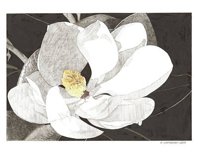Magnolia 1 Art Print by Paul Shafranski