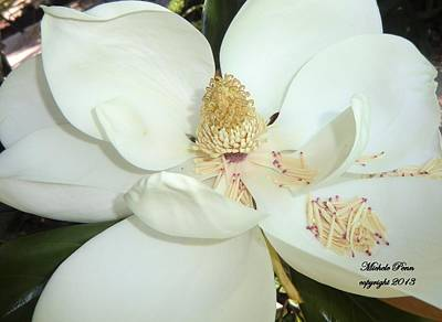 Photograph - Magnolia Love by Michele Penn