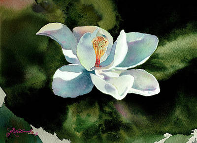 Magnolia At Starwood Glen Art Print