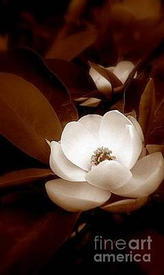 Photograph - New Orleans Magnolia Beauty by Michael Hoard