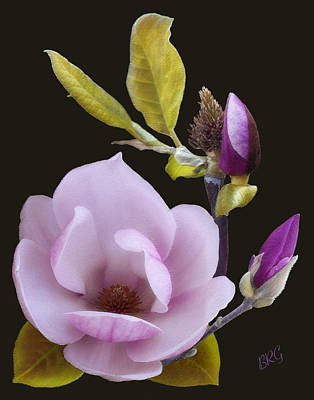 Photograph - Magnolia by Ben and Raisa Gertsberg