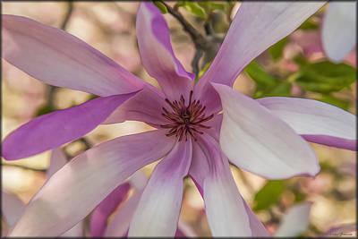 Photograph - Magnolia Blossom by Erika Fawcett