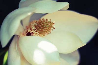 Photograph - Magnolia Blossom by Melinda Fawver