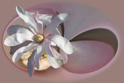 Photograph - Magnolia Blossom Series 707 by Jim Baker