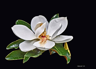 Photograph - Magnolia Blossom by T Guy Spencer