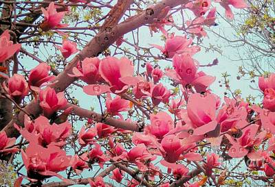 Magnolia Blossoms In Spring Art Print
