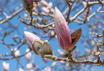 Magnolia Bud Art Print by Greg Thiemeyer