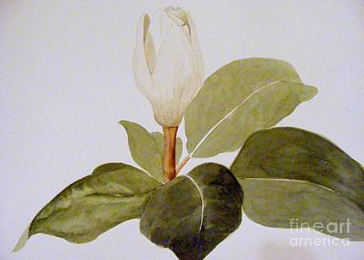 Art Print featuring the painting Magnolia Bud II by Nancy Kane Chapman