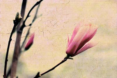 Magnolia Blossom Photograph - Magnolia Bud by Jessica Jenney