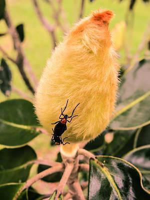 Magnolia Bud With Lovebugs Art Print