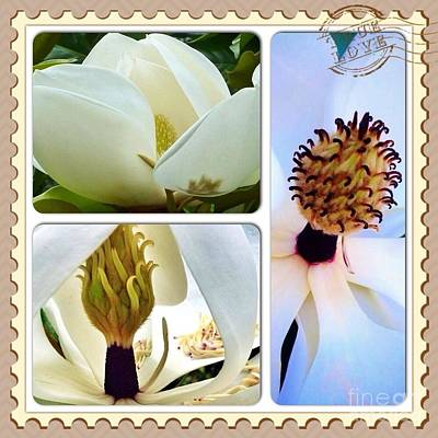 Photograph - Magnolia Collage by Susan Garren