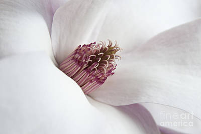 Photograph - Magnolia Flower by Jeannette Hunt