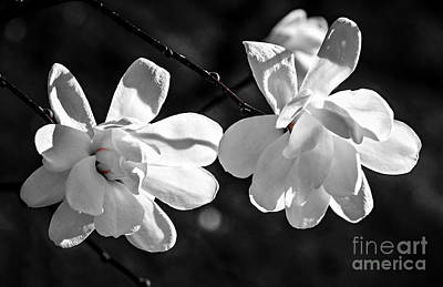 Nature Photograph - Magnolia Flowers by Elena Elisseeva
