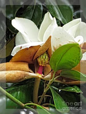 Magnolia Flowers - Flower Of Perseverance Art Print by Ella Kaye Dickey