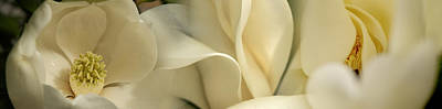 Flower Head Photograph - Magnolia Flowers by Panoramic Images