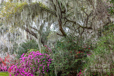 Photograph - Magnolia Garden by Susan Cole Kelly