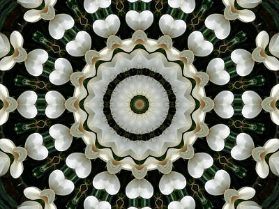 Photograph - Magnolia Hearts Mandala by MM Anderson