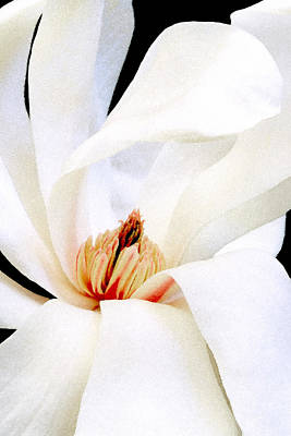 Photograph - Magnolia I by Michael Moschogianis