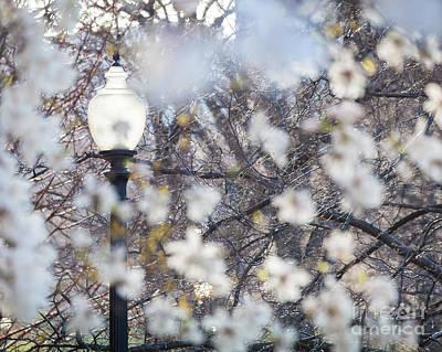 Digital Art - Magnolia Impression 1 by Susan Cole Kelly Impressions