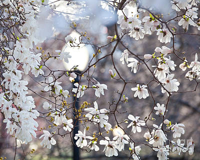 Digital Art - Magnolia Impression 2 by Susan Cole Kelly Impressions