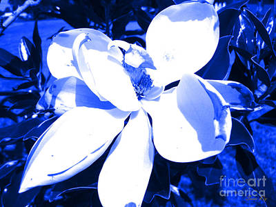 Digital Art - Magnolia In Blue by Oksana Semenchenko